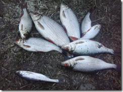 рыбалка рыба  rybalka
