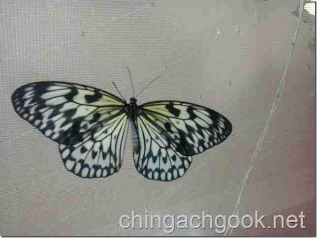 зима выставка бабочка  novosti