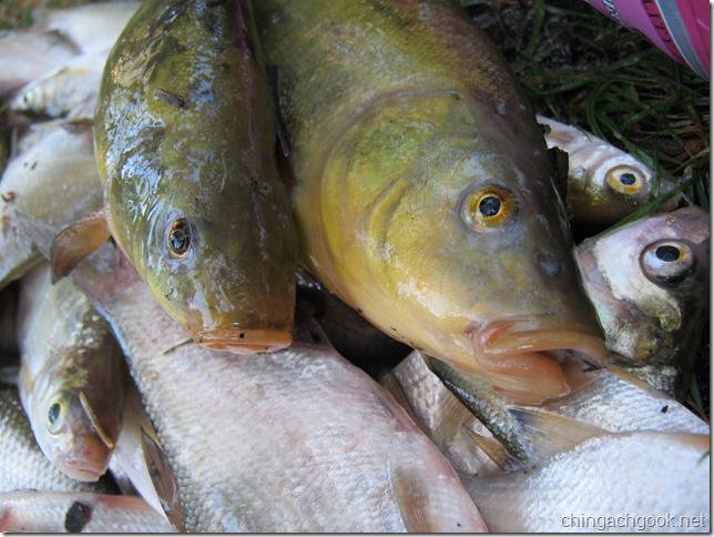 рыбалка подлещик линь июль  rybalka