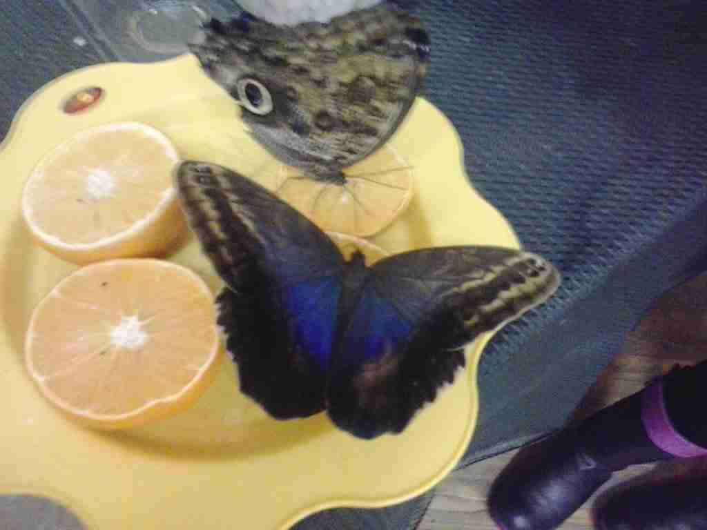 Зимняя выставка живых бабочек