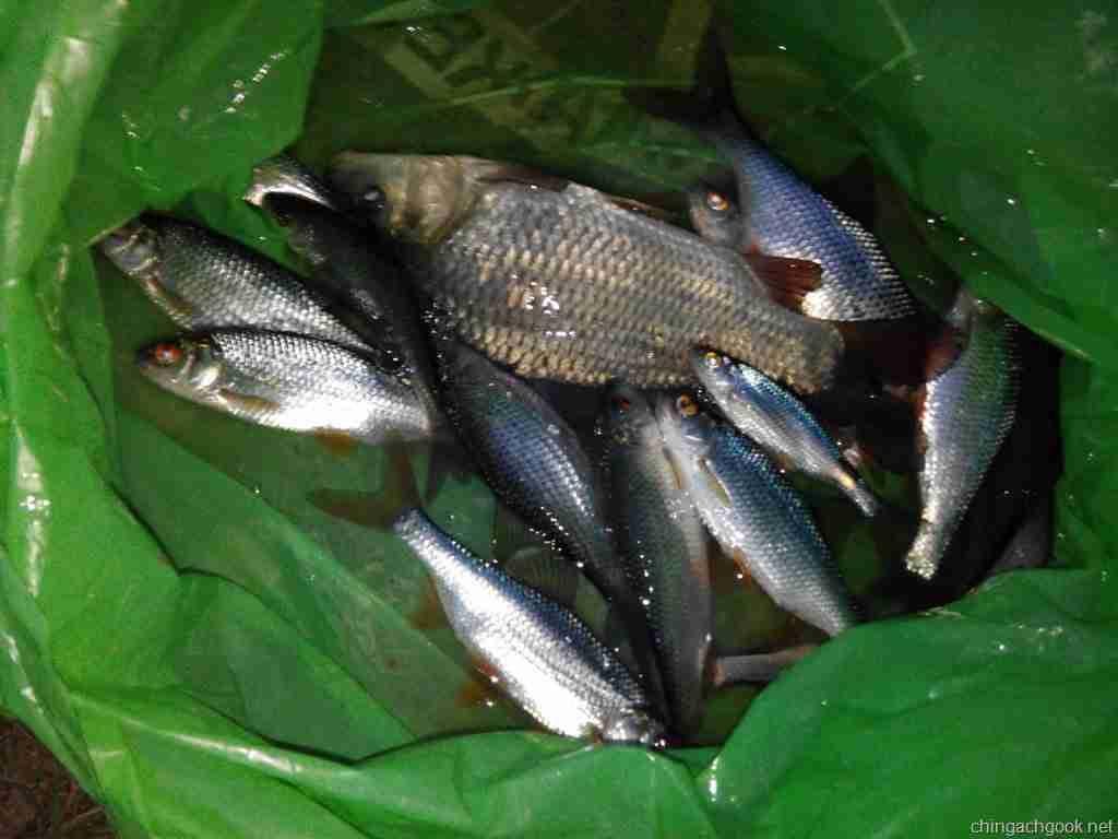 Мартовская рыбалка
