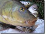 Июльская рыбалка