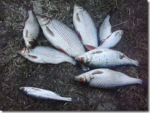 Съездил на рыбалку